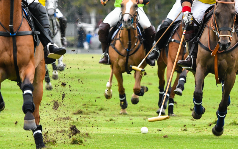 Polo workshop